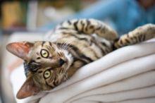 Jednoduché rady o kočkách,  které Vám pomohou